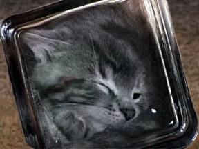squishgray-3.jpg