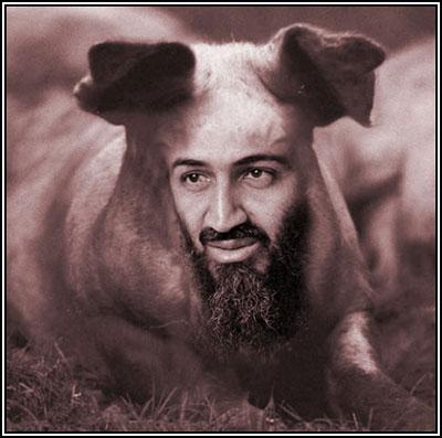 ubl-pig-face